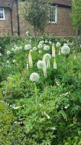 Allium-and-Lupin